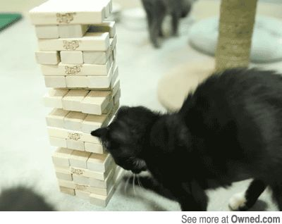 funny picture, jenga, cat, gif, funny