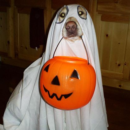Ghost | Dog Halloween Costumes: 20 Funny, Homemade Dog Costumes You'll Love | Holidays | Disney Family.com