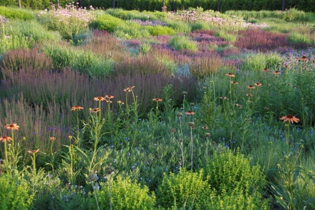 52 best images about lurie garden on pinterest gardens for Gardening with grasses piet oudolf