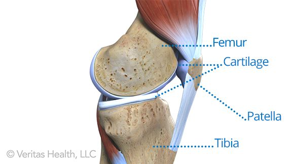 The bones, tendons, ligaments, and muscles of your knee joint are all capable of being injured, which can trigger knee pain. This guide to knee injuries explains the common causes.