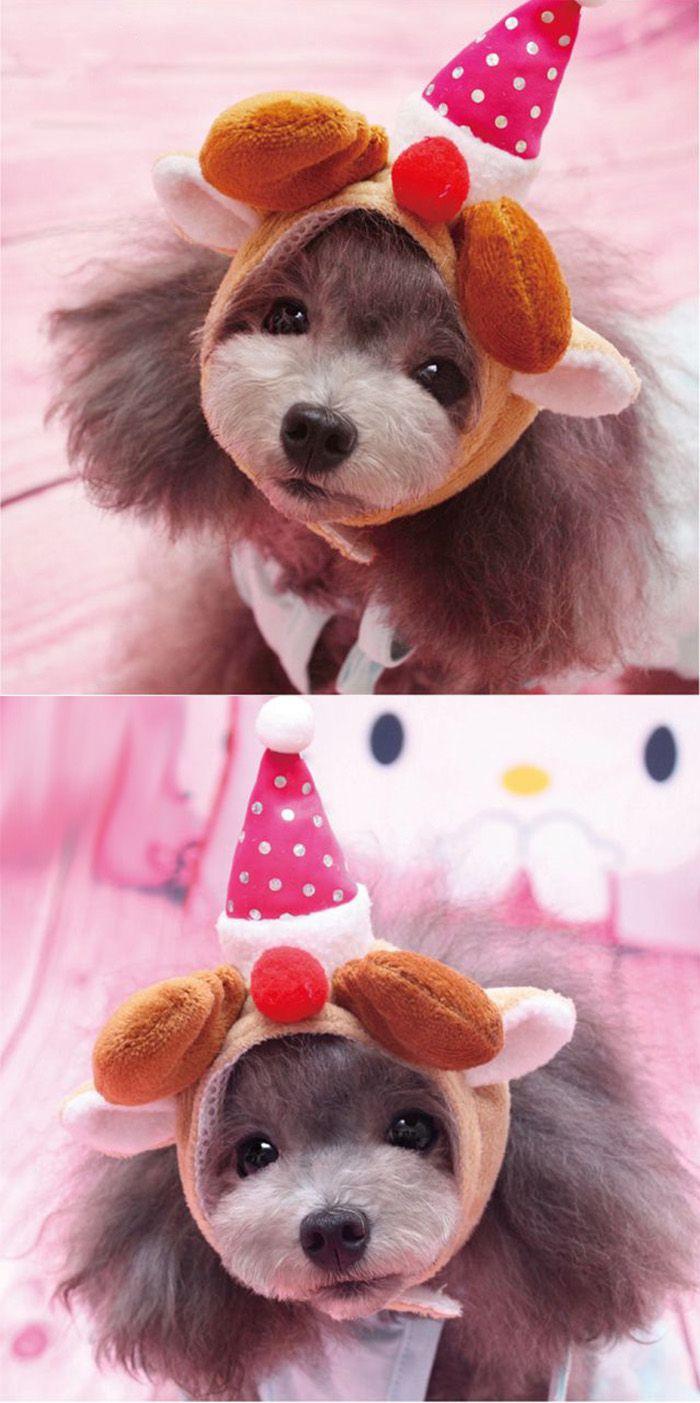 19 best chapeau d guisement pour chien et chat images on pinterest dog cat hats and dogs. Black Bedroom Furniture Sets. Home Design Ideas