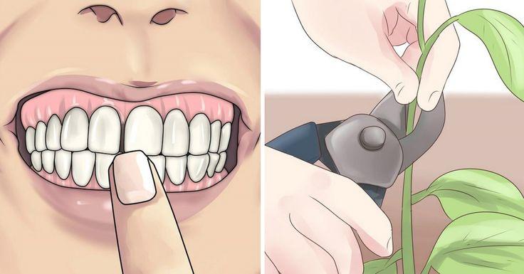 Забудь о проблемах с зубами! Эти 8 растений сделают твою улыбку неотразимой.