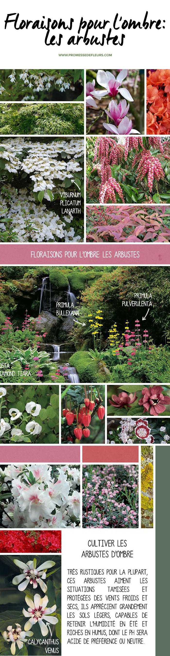 Floraisons pour l'ombre: les arbustes Plus