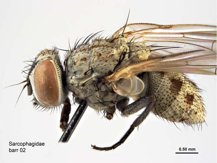 25 Best Fly Images On Pinterest Anatomy Anatomy - Fly Anatomy Head
