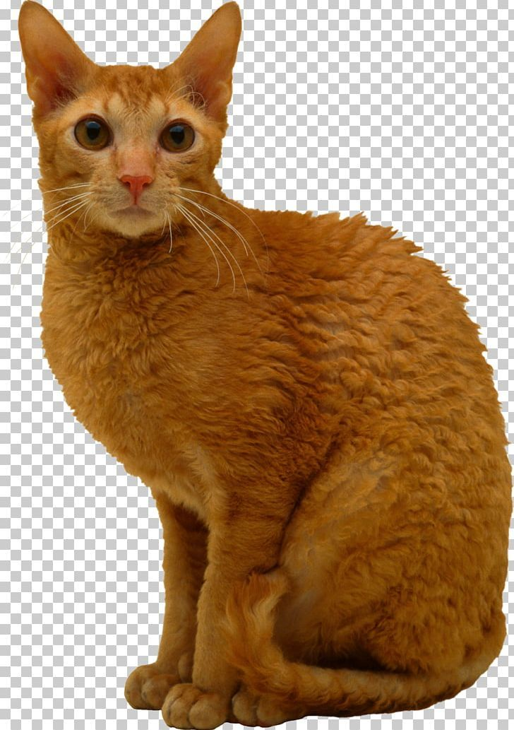 Cats Png Cats Cats Animals Png
