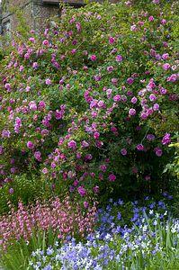 Rózsák az angol kertben - gazigazito.hu