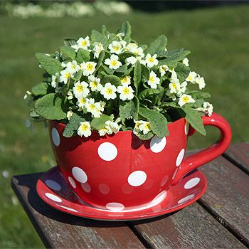 Another giant teacup and saucer planter from Strawberry Fool
