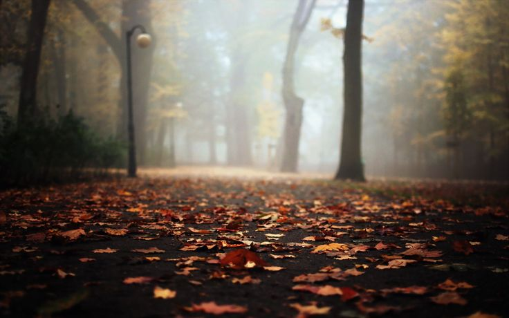 autumn leaves falling on road Wallpapers HD