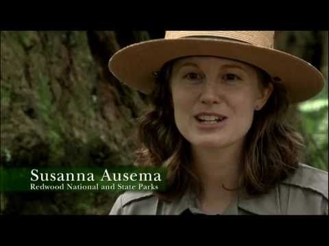 Redwood National Park Ranger Talk - YouTube This young lady has my Dream Job.