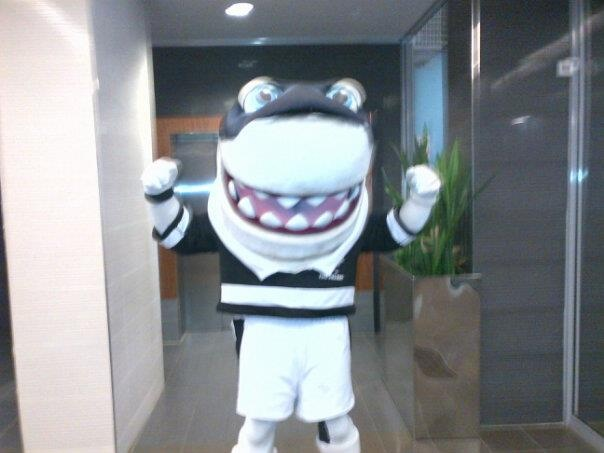 the best rugby team in the world, Natal Sharks