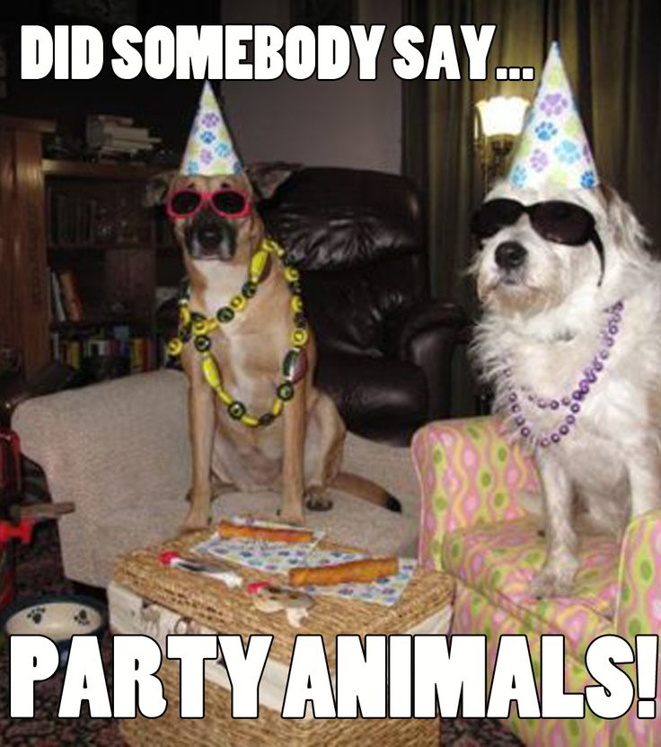 Did somebody say… party animals! Funny Dogs To brighten