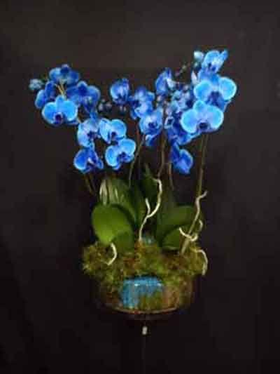 Espectacular centro de orquídeas azules, ideal para sorprender. Orquideas decoradas en jarron de cristal