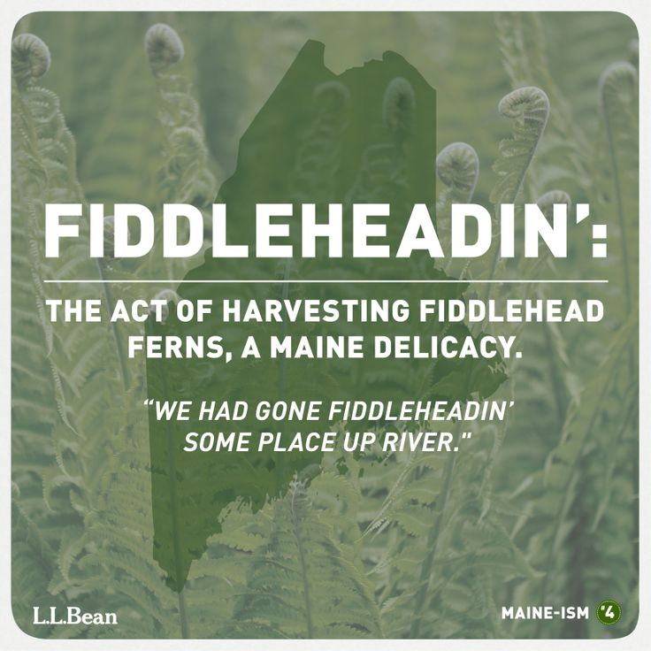 It's Fiddlehead season!