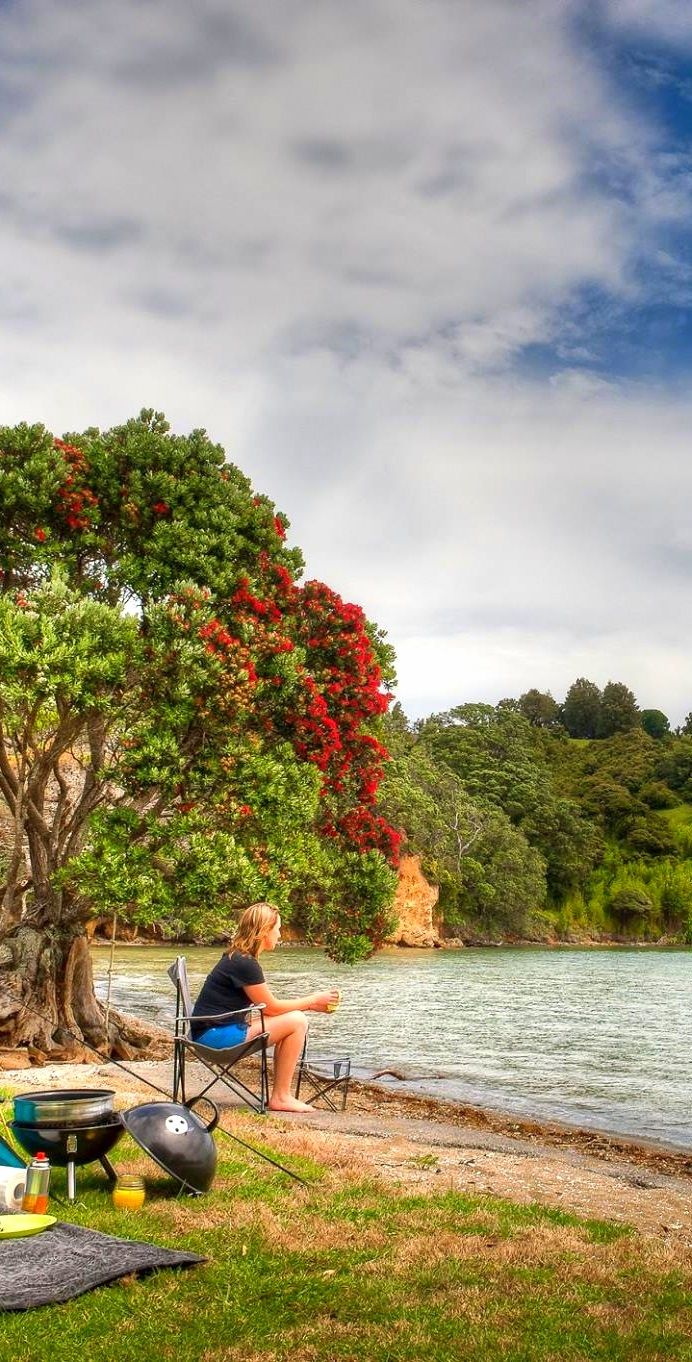 Bill✔️   Camping on the Coromandel Peninsula, NZ.  Summer comes in November, thru March (more or less), so Christmas Holidays are summer on the beach, or out camping, hiking, sailing, etc!  Note the red-flowered Pohutukawa Tree. New Zealand's Native Christmas Tree!     Bill Gibson-Patmore.  (curation & caption: @BillGP). Bill✔️