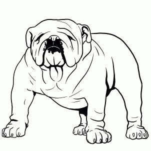 how to draw a bulldog english