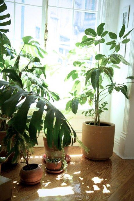 Gabriela jauregui mexico city apartment plants and city Indoor apartment plants