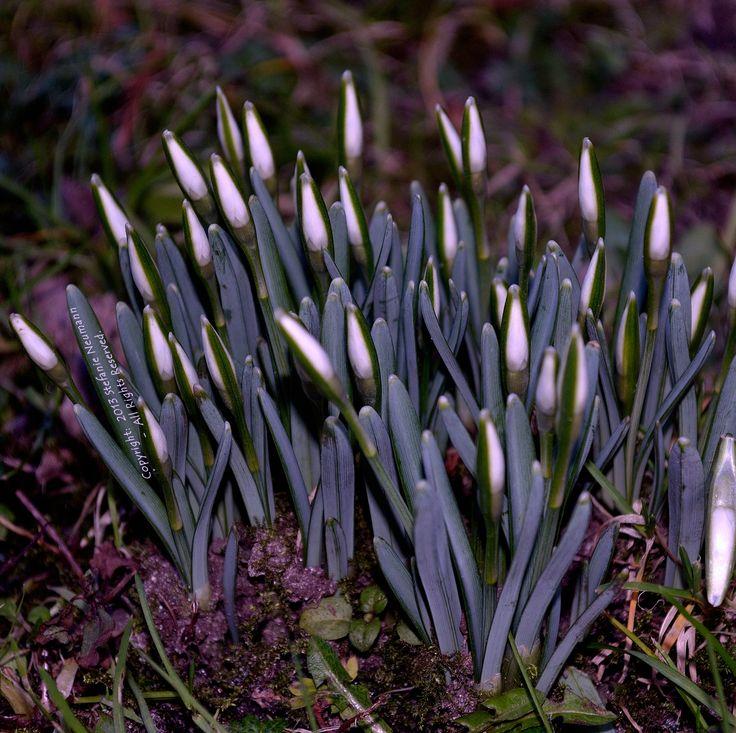 RÜCKKEHR DES LICHTS  --  Über #Imbolc, #Frühling und eine Einladung, unser #Licht erstrahlen zu lassen.  -  von Steffi am 2014-02-04 auf #KokopelliBeeFree Blog