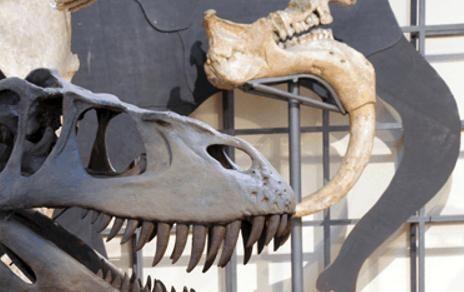 museo ciencias naturales. Madrid