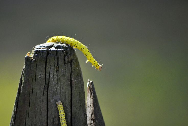 C mo luchar contra las plagas en el huerto con remedios - Remedio contra las moscas ...