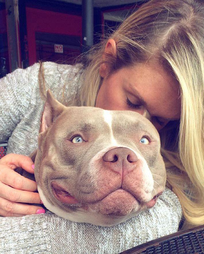 Texas Size Bullies Website   Champion American Bully Breeder