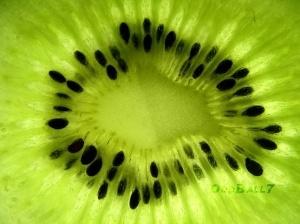Kiwi by amy.shen