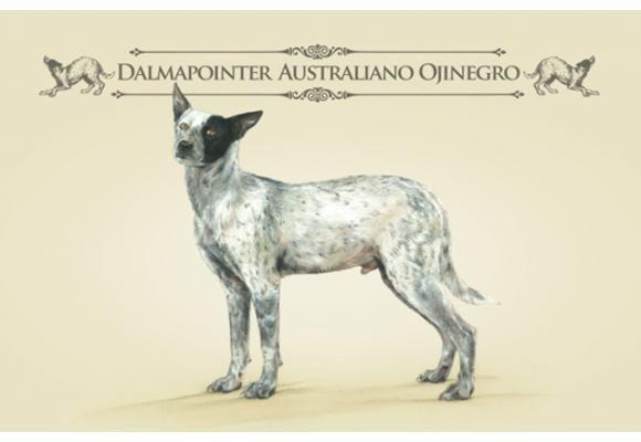 Las razas únicas: una exitosa campaña para fomentar la adopción de mestizos   SrPerro.com, la guía para animales urbanos.
