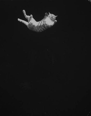 LIFE: A cat being dropped upside down to demon... - Hosted by Google: Crazy Cats, Ralph Cranes, Spaces Suits, Cats Fall, Fall Down, Flying Cats, Cats Movement, Cats Lady, Fall Cats
