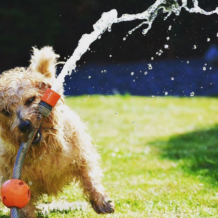 Pet Approved Lawns!! Pinnacle Lawn Service | Landscaping & Irrigation Specialists | Follow for a 10% discount!  Visit: http://ift.tt/2m1kYh7  #grass #landscape #lawnservice #lawncare #lawnmower #landscaping #follow #springcleaning #mowing #mowinggrass #cuttinggrass #garden #gardening #green #houston #htown #htx #followme #instagood #puppies #puppy #labsofinstagram #goldenretriever #dog #dogs #water