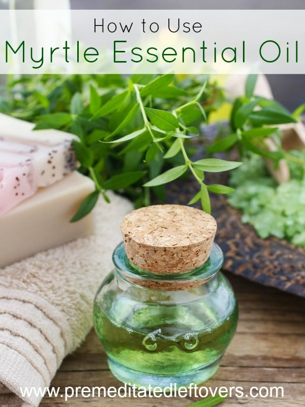 How to Use Myrtle Essential Oil- Myrtle essential oil smells amazing and can help with common health and beauty issues. Learn more with these helpful tips.