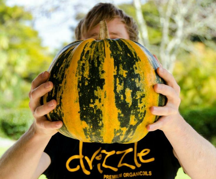 Can you guess what the inside of this Styrian pumpkin looks like?  #styria #pumpkin #drizzle #pumpkinseedoil #healthyfood