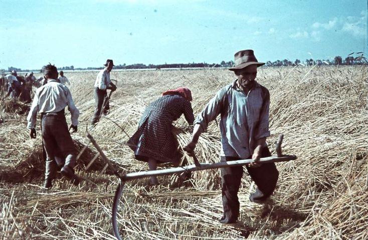 Harvest, Hungary, 1938. by Tamas Konok Sr.