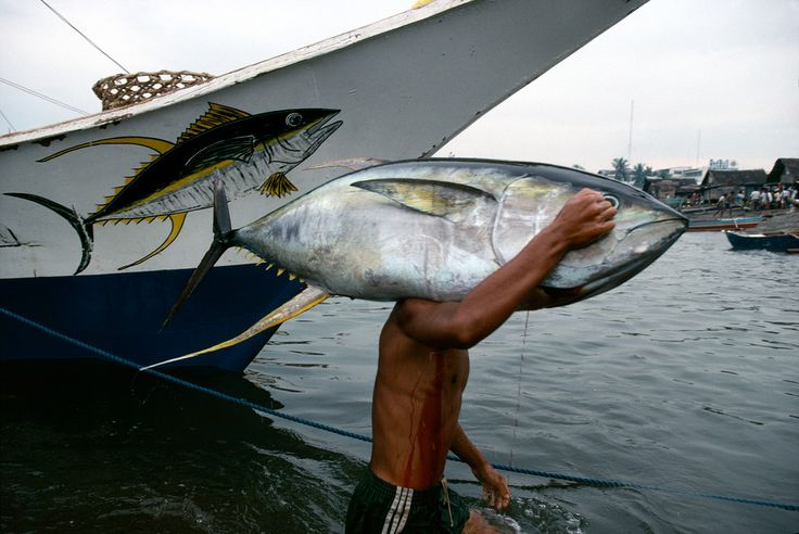 Bruno Barbey PHILIPPINES. S.Mindanao. General Santos City harbour. Unloading tuna fish. 1995.