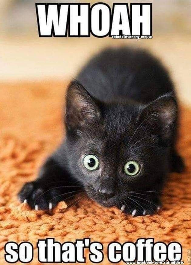 Pin By Bamed Ink Llc On Coffee Quotes Funny Cat Memes Funny