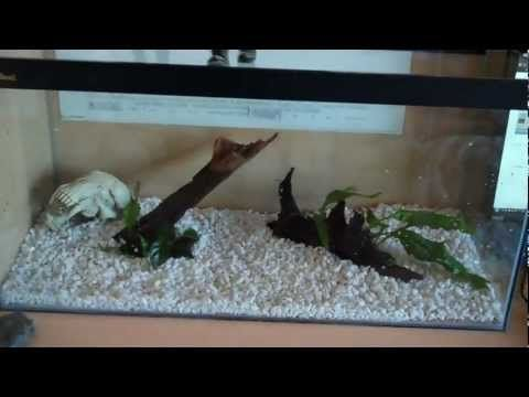 Setting up a Tropical Tank - YouTube