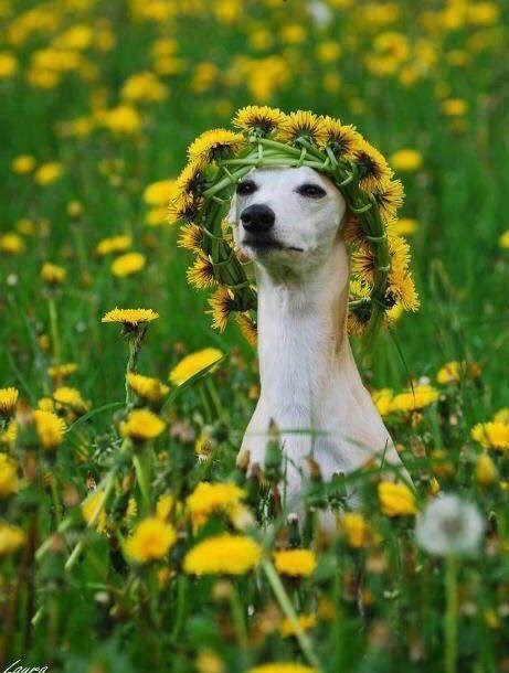 #sommer-hund
