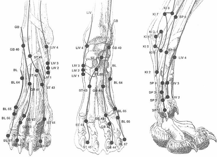 Les 8 meilleures images du tableau Anatomie de l'appareil