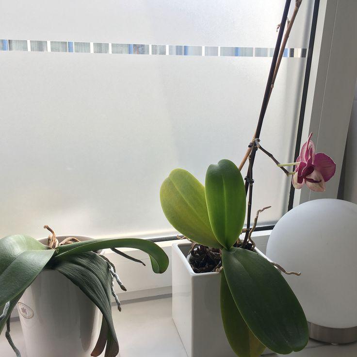 Spectacular Fensterfolie Bad ja ihr wollt euch vor den Blicken beim duschen sch tzen