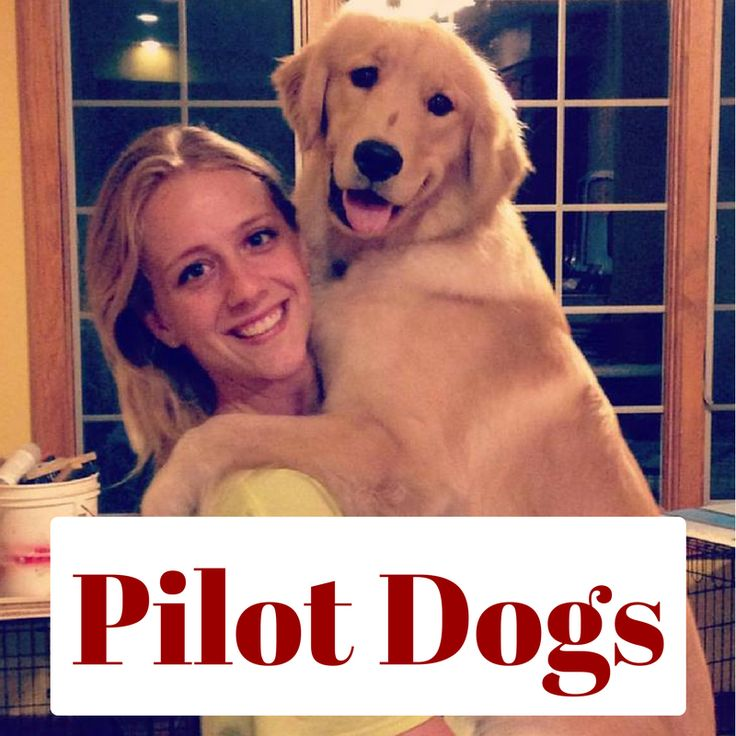 Zoey and Gracie: A Plug for Pilot Dogs - Before my boyfriend and I began dating, he signed up to be a puppy trainer for a guide dog company in Columbus. About a week after we started dating, I went with him to pick up the first puppy, who…