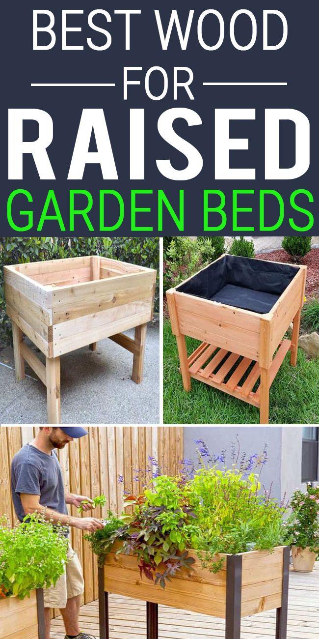 BEST WOOD FOR RAISED GARDEN BEDS Ogrody