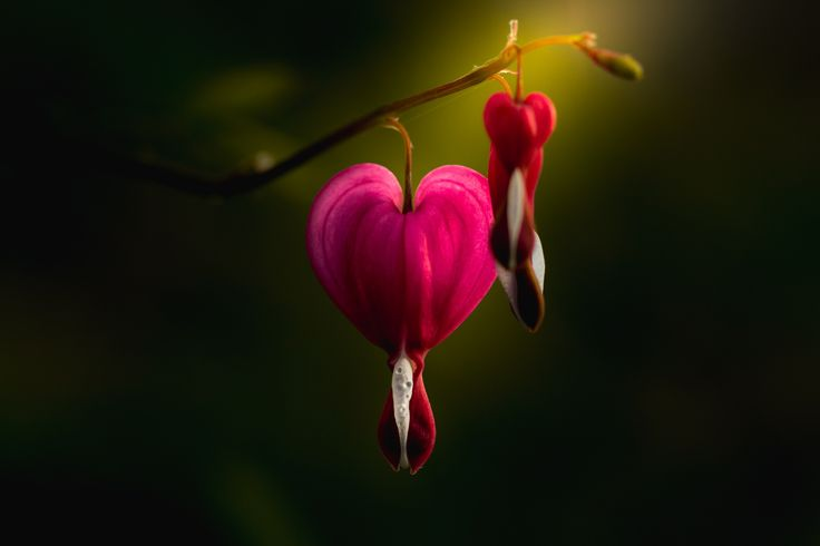 Photograph My Heart For You by Paul Barson on 500px