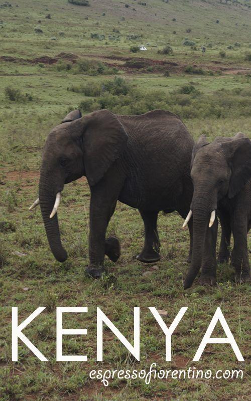 ¿Pensando en viajar a Kenia? El país africano es un espectáculo de paisajes y experiencias pero... ¡hay que estar preparado! Organiza tu safari y tu viaje con los mejores consejos en www.espressofiorentino.com y... ¡disfruta! #Kenya #Africa #Animals #Animales #elefantes #elephants