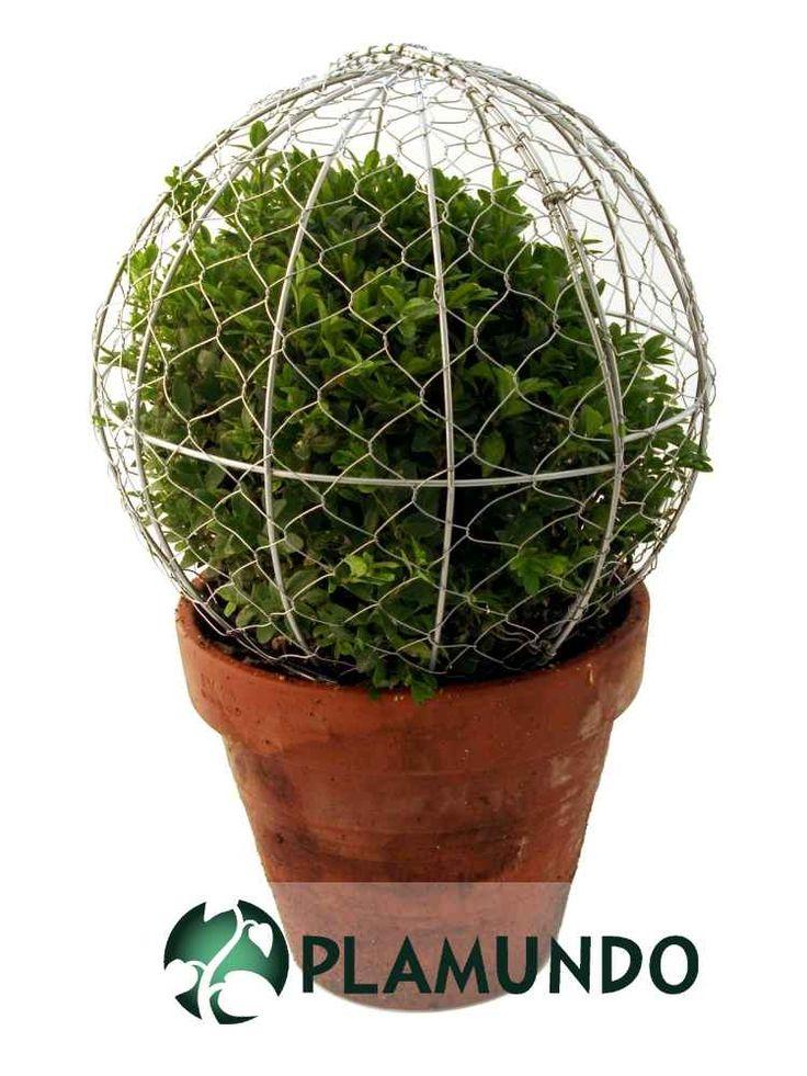 20 besten formschnitt topiary bilder auf pinterest buchsbaum schneiden garten und schablone. Black Bedroom Furniture Sets. Home Design Ideas
