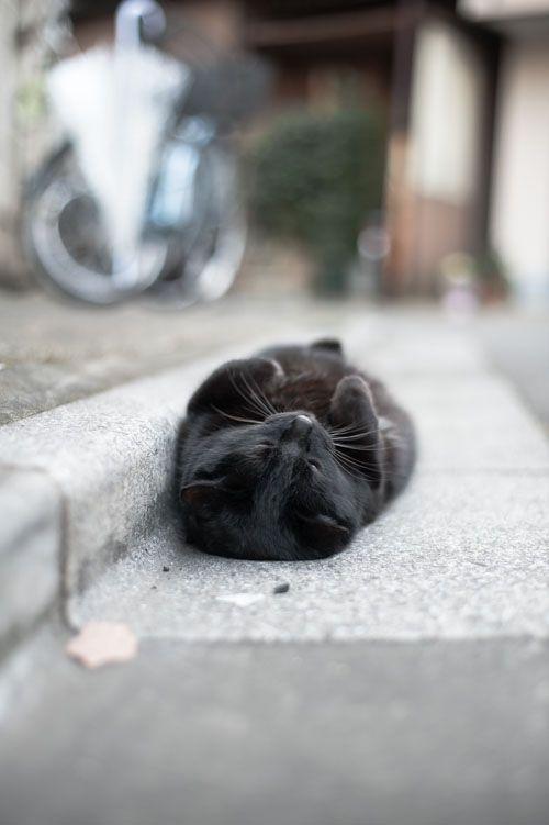 無防備、、、: Kitty Cats, Cats Naps, Sleep...  Found o