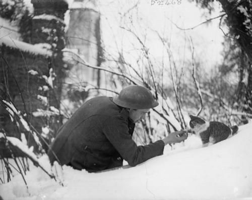 """A British soldier """"shakes hands"""" with a kitten on a snowy bank, Neulette, 1917."""