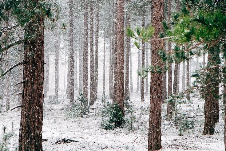 Wilderness Survival: Tips In Surviving Extreme Weather – Survival Revelations