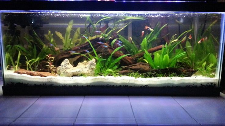 20 gallon long; neon and cardinal tetras, hi fin pineapple mickey mouse platys, gold tuxedo guppies, assassin snails, and tons of common pond snails.  Also lots of corkscrew valisneri, jungle valisneria, amazon swords, rubin swords, ruffled swords, micro swords, dwarf amazon swords, and alternathera renicki.  Even a couple sprigs of windelov java fern and a anubias nana from another tank that are here for recovery.