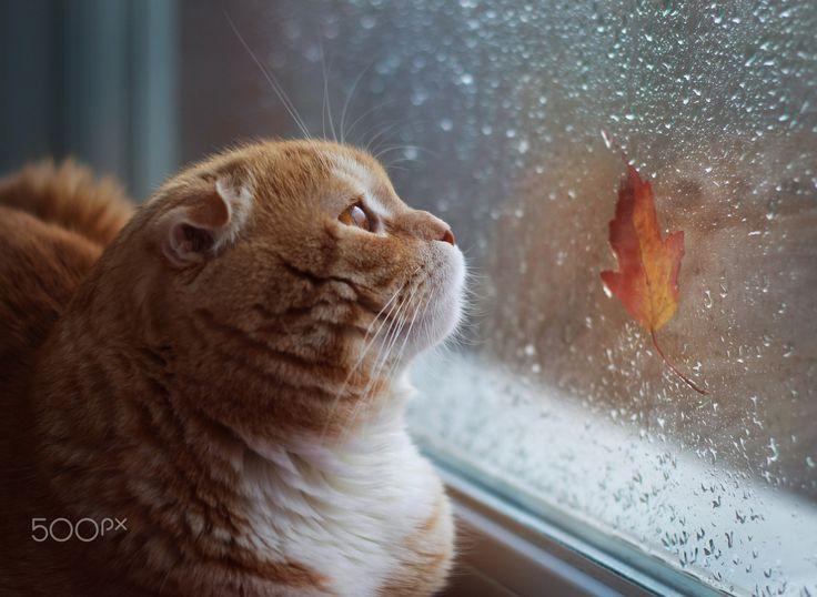 Dogs Calm On Rainy Days