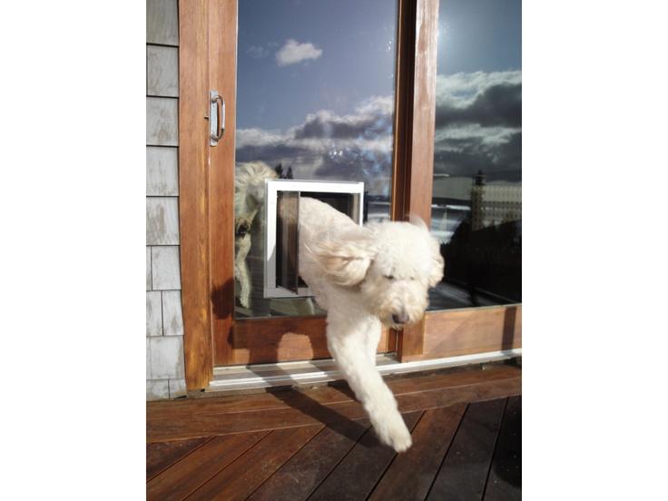Dog door for glass  doors  or walls  We even have XL doggie doors for large  and giant breeds 41 best Doggy Doors images on Pinterest   Pet door  Dog stuff and  . French Door With Dog Door Built In. Home Design Ideas