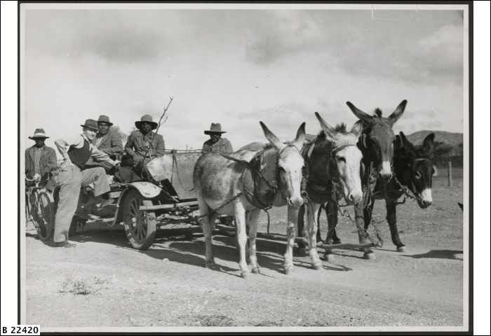 Aboriginals with donkey team in the Flinders Ranges ca. 1930