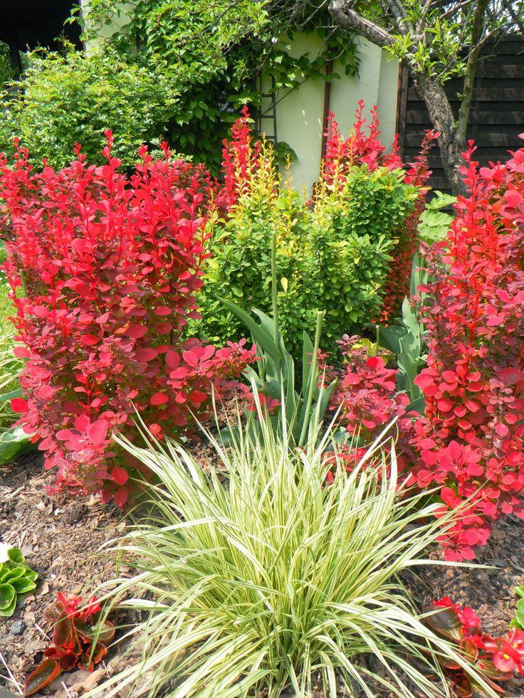 W świecie piękna natury: Gra kolorów